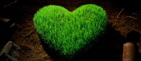 Grass-heartblog