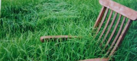 Grass-746319